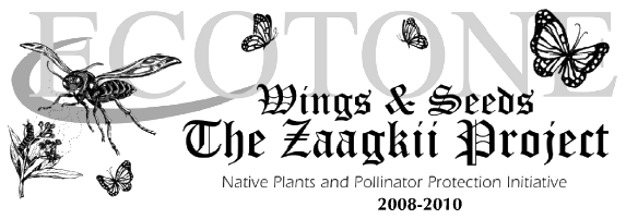Wings & Seeds The Zaagkii Project