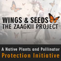 Wings and Seeds - The Zaagkii Project