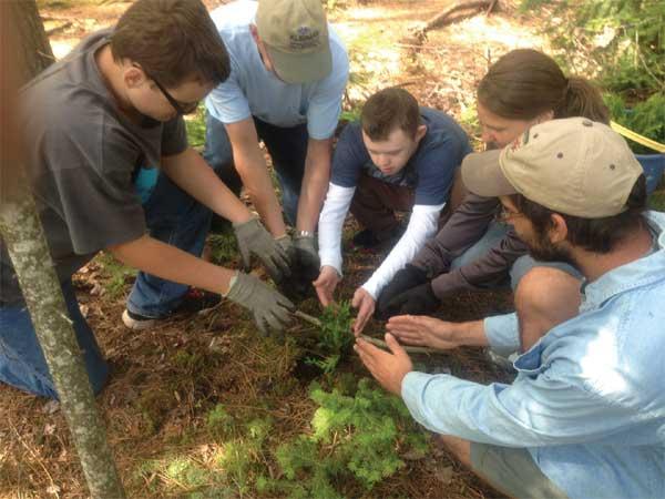 Planting Cedar Trees
