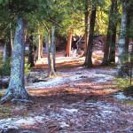 Winter 2016 Ecotone